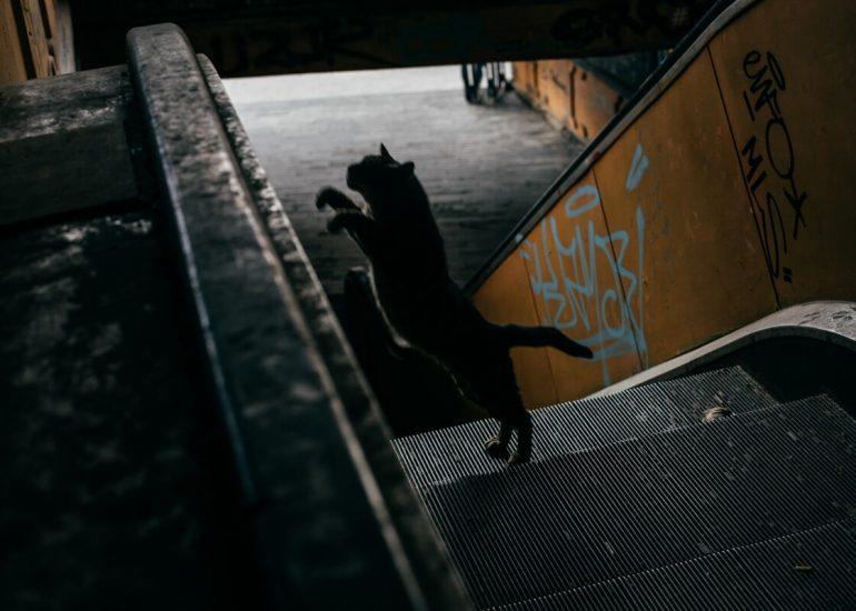 sanja knezevic vii academy photojournalism